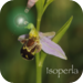 OrchidId - The British Orchid Identification Guide